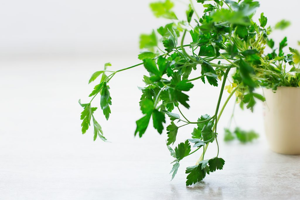 gut health healing herbs parsley functional medicine reduce bloating why am I bloated